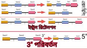 কৃত্রিম RNA স্প্লাইসিং