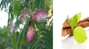 ডিএমটির উৎস Banisteriopsis caapi, Mimosa tenuiflora,Diplopterys cabrerana,Prestonia amazonica ইত্যাদি উদ্ভিদ প্রজাতির গাছ।